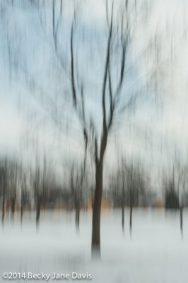 Winter Tree, Noon