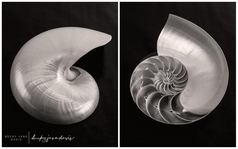 Nautilus Diptych