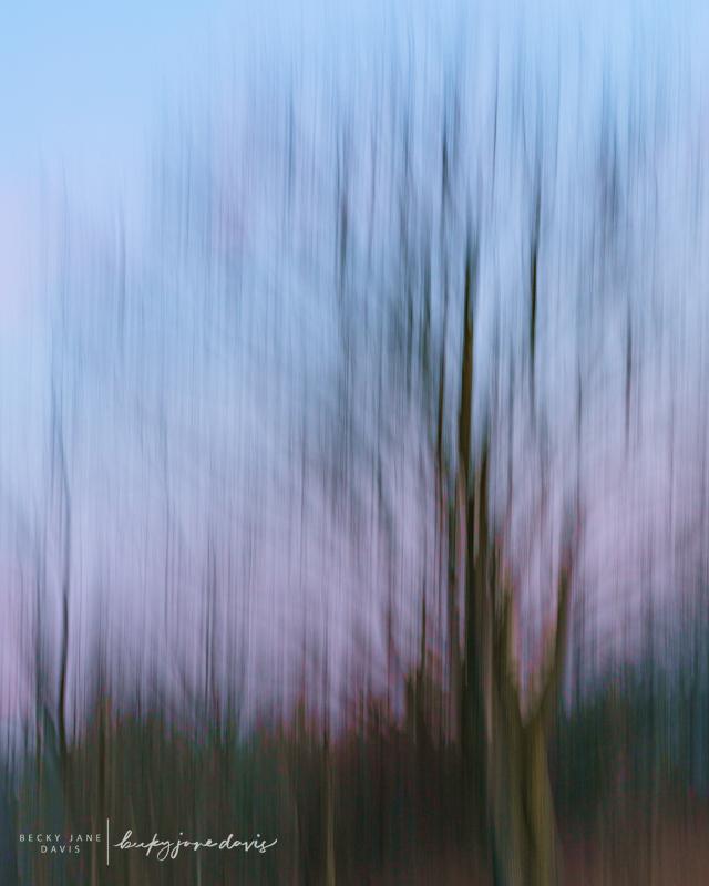Tree Wisps