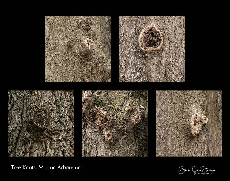 Tree Knots Collage