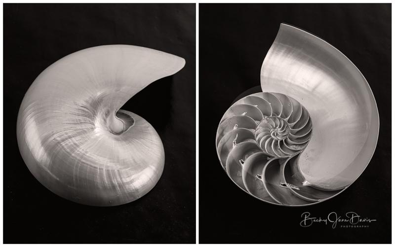 Nautilus 02 Diptych