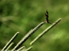 Dragonfly, St. James Farm