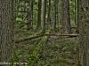 Trail of Cedars, Glacier National Park