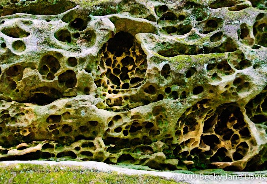 Wormy Rock