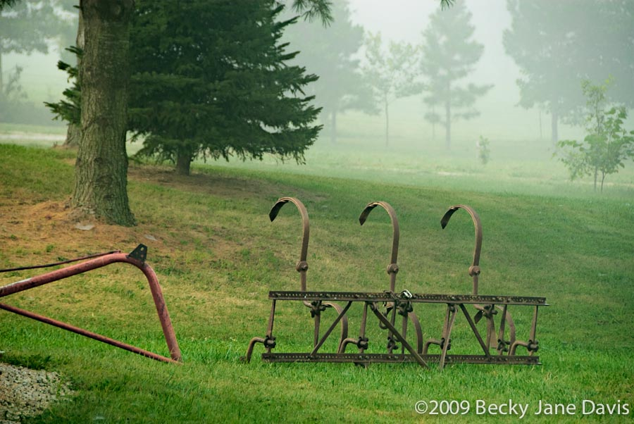 Foggy Farm