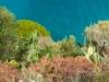 Capri-Plants