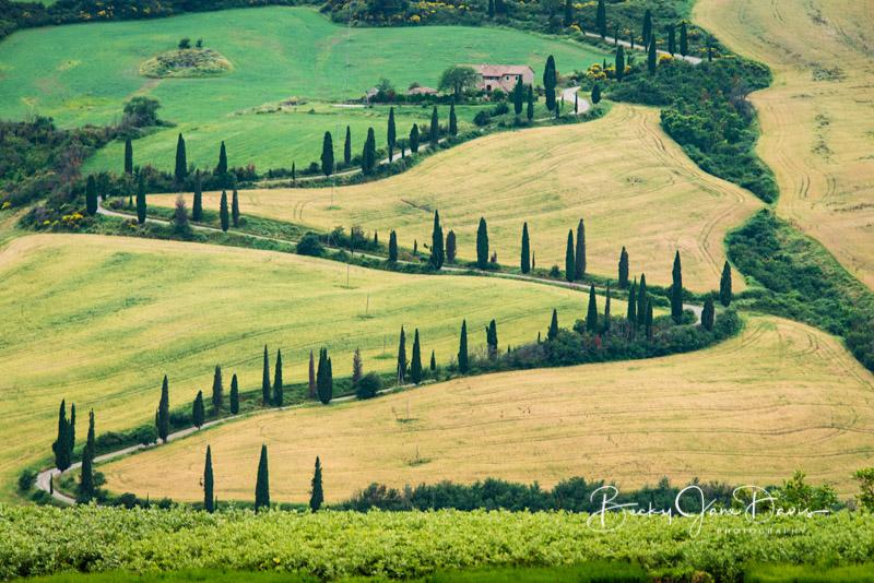 valdrcia_09-cypress-zigzag