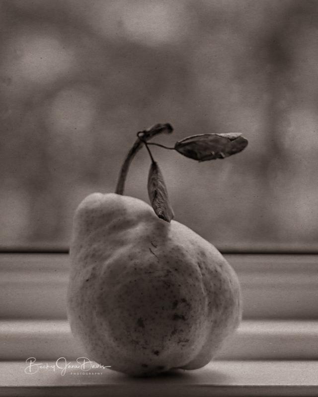 Sepia Toned Pear on Windowsill