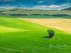 Valdorcia-view-tree