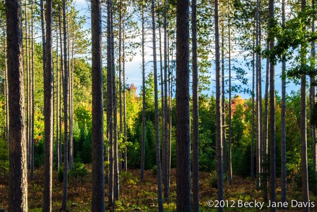 pines-0069