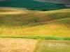 SanQuirico_14-fields