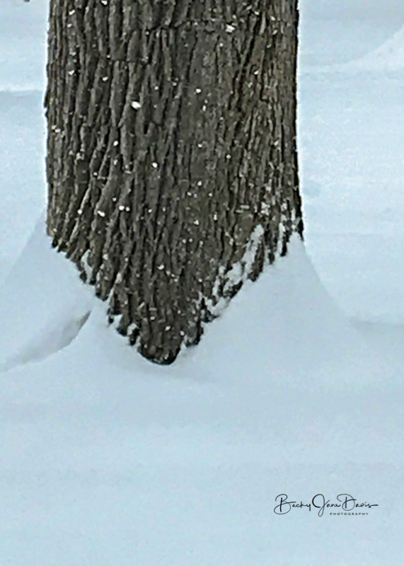 Wind meets Frozen Water at the Tree