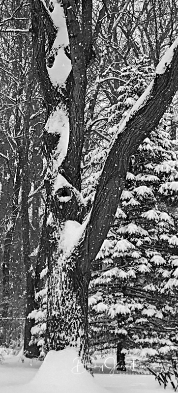 Curly Snow Pattern