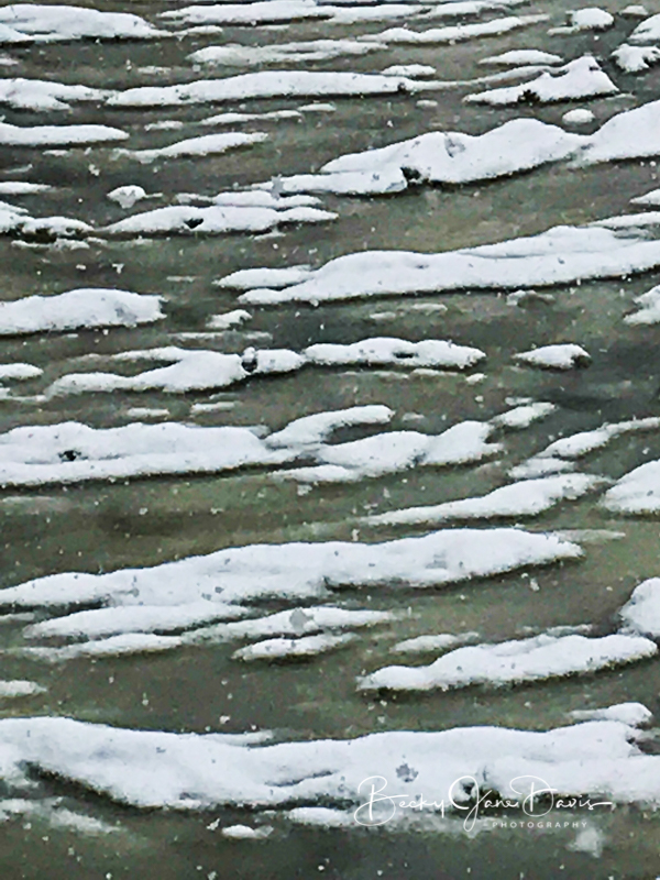 River Snow Clumps