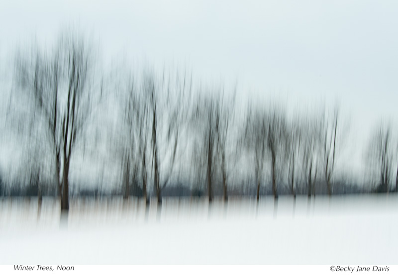 Winter Trees, Noon