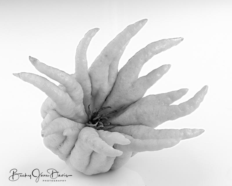 Buddha-Hand-Citron-blackandwhite