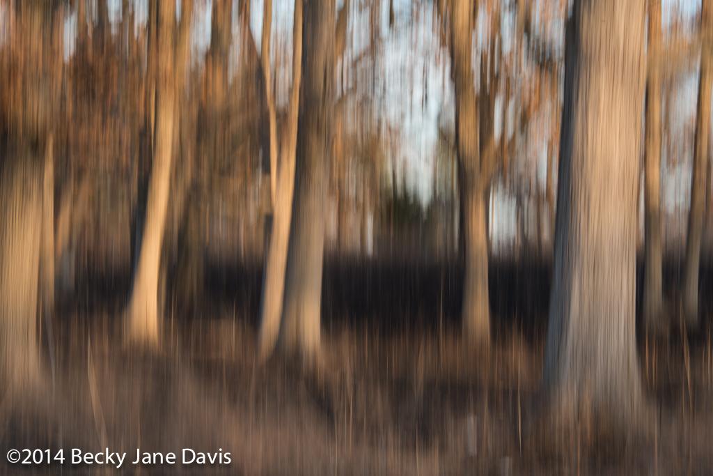 Spring Brun, Sunset 1