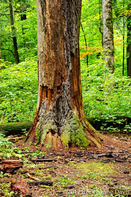 Dead Tree Trunk