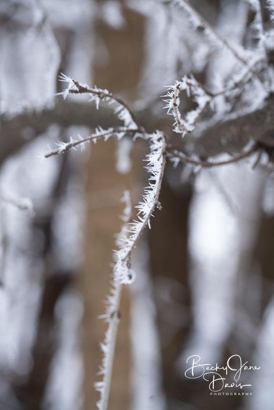 Hoar Frost 04