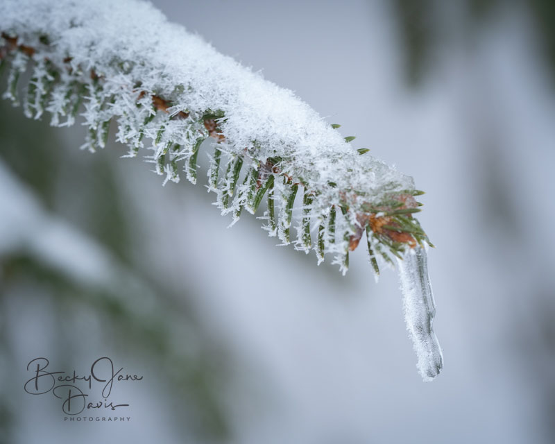 Hoar Frost 03