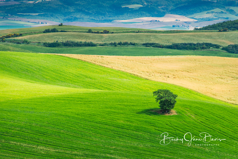 valdrcia_07-lone-tree