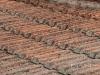 Vatican-roof-tiles