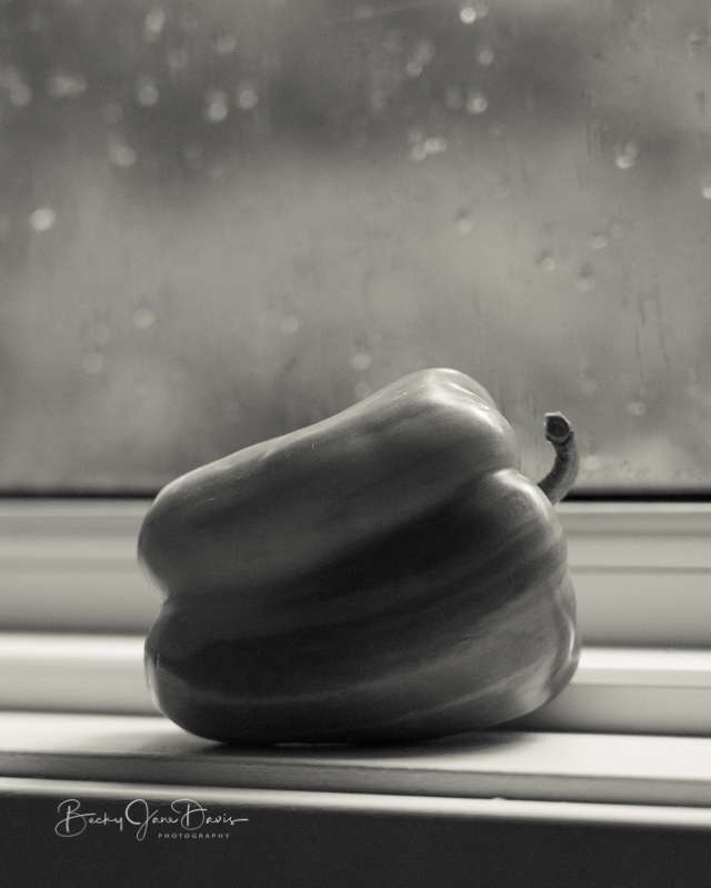 Striped  Pepper on Windowsill