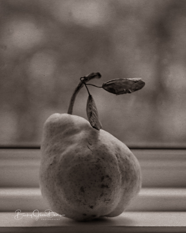 Sepia Toned Pear on Windowsill