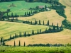 Montepulciano_16-zigzag-cypress