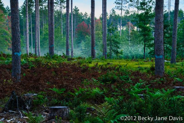 pines-0058