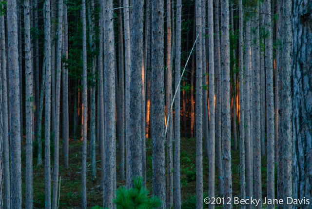 pines-0075