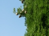 SanQuirico_02-cypress