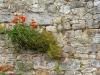SanQuirico_12-poppy-wall