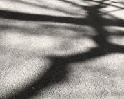 BJD_Shadows_01