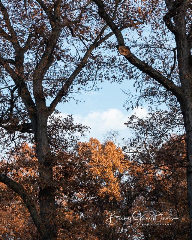 Golden Hour Framed by Nature